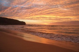 Nth Curl Curl Beach